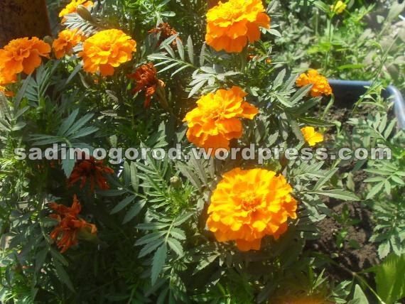 Во что садить цветы