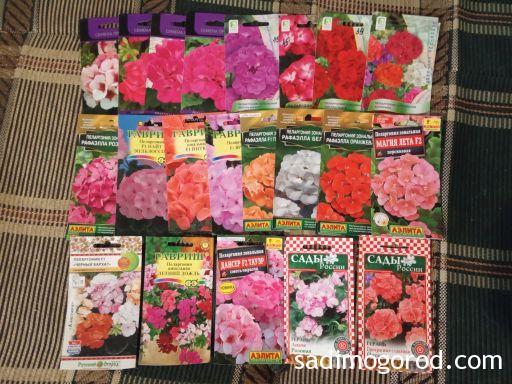 Семена: пеларгонии: выращивание пеларгонии из семян